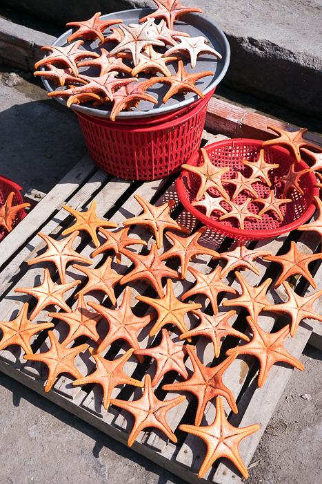 Dead Starfish