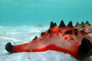Star Fish Beach Ph Quoc