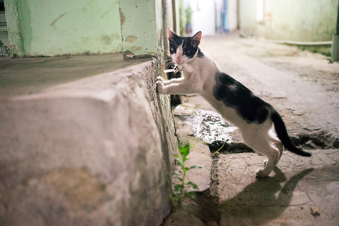 Saigon's Street Cats and Dogs